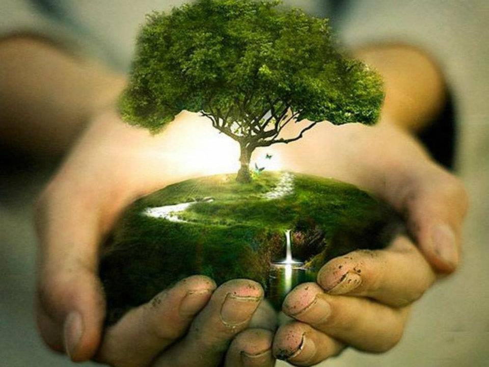 2 avril arbre mains
