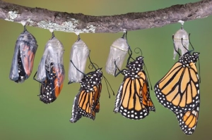 butterfly forms